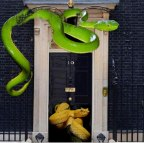 Inside the Vipers Pit of No 10 Downing St